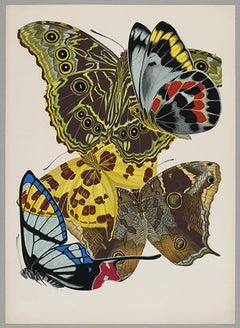 Butterfly Pochoir Prints - 4