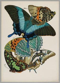 Butterfly Pochoir Prints - 5