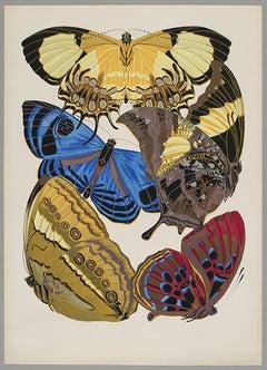Butterfly Pochoir Prints - 7