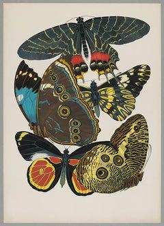 Butterfly Pochoir Prints - 8