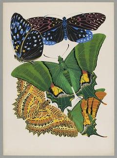 Butterfly Pochoir Prints - 9