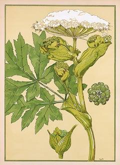Floral Pochoir Prints - 6