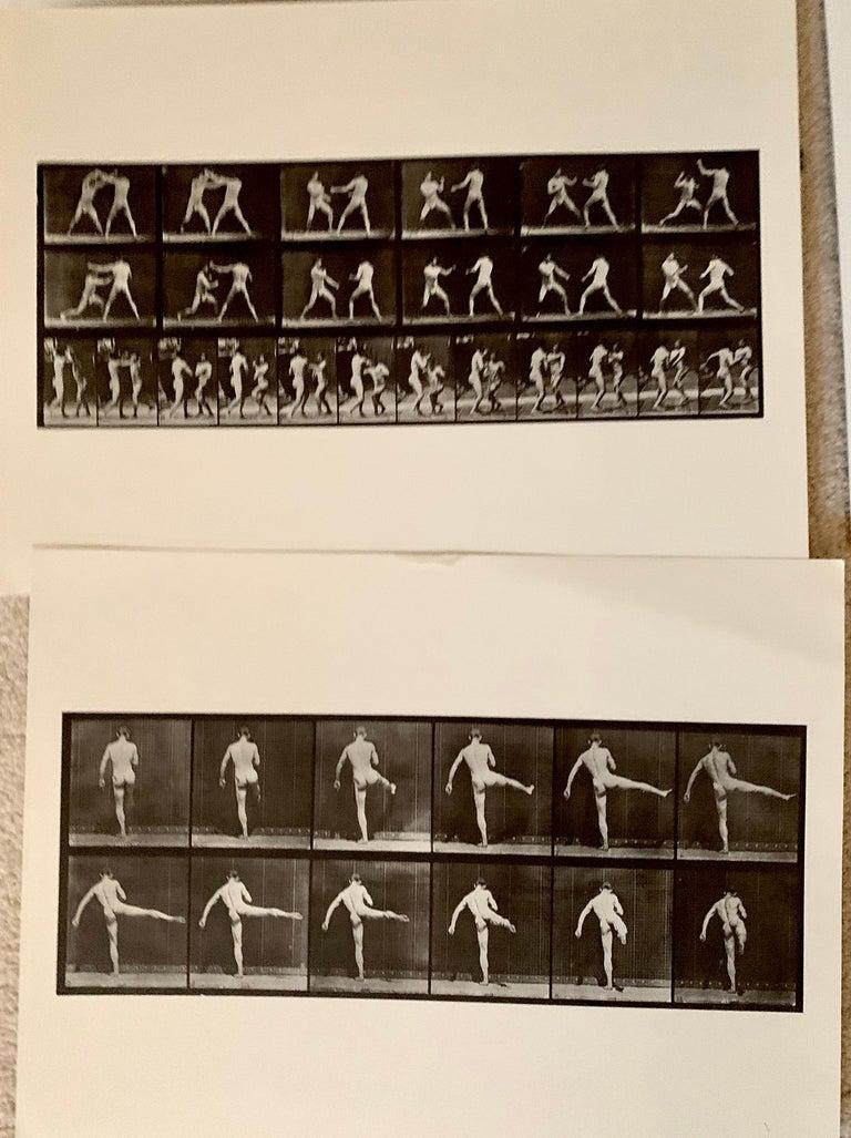 American Eadward Muybridge Animal Locomotion Plate 369 HelioGravure Black White Print For Sale