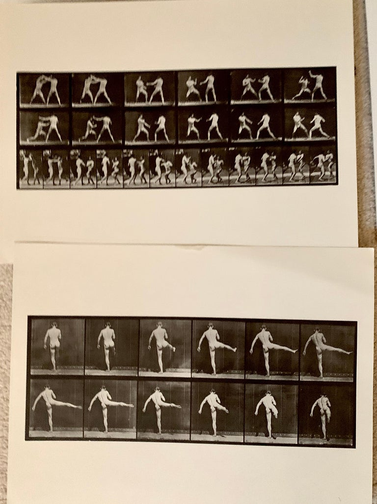Eadward Muybridge Animal Locomotion Plate 369 HelioGravure Black White Print In Good Condition For Sale In Brooklyn, NY