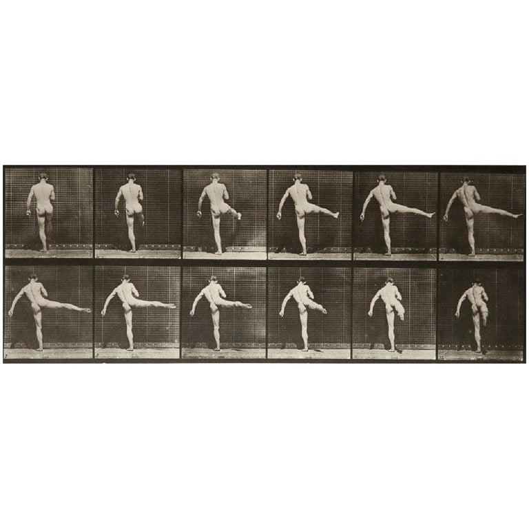 Eadward Muybridge Animal Locomotion Plate 369 HelioGravure Black White Print For Sale