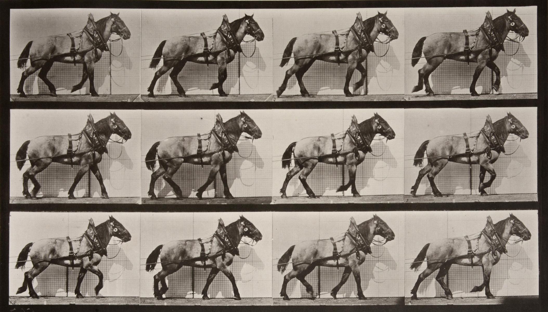 Animal Locomotion: Plate 567 (Horse Walking), 1887 - Eadweard Muybridge