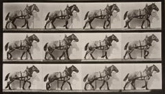 Animal Locomotion: Plate 567 (Horse Walking), 1887