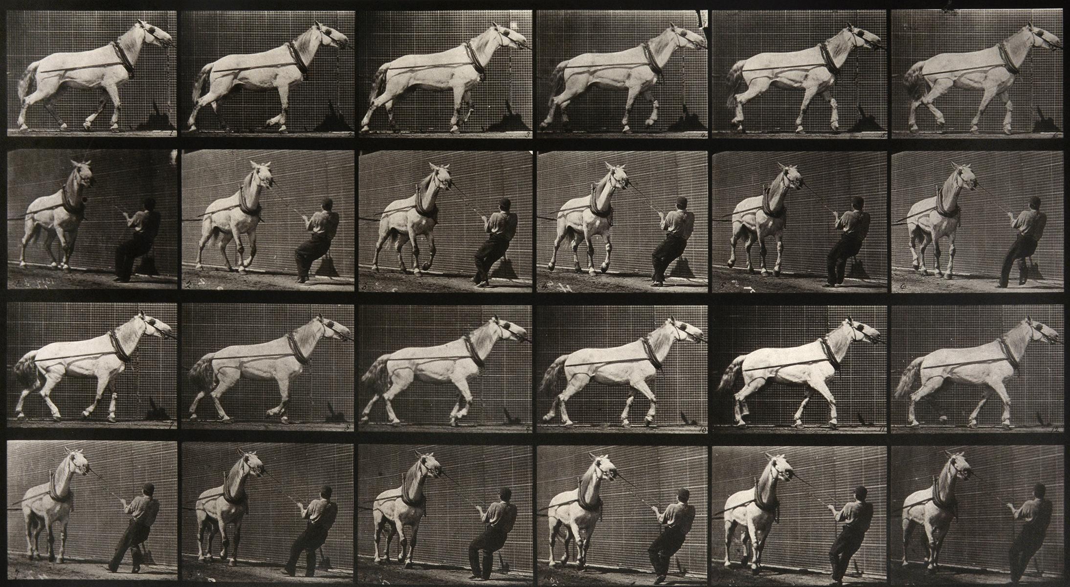 Animal Locomotion: Plate 573 (Man Pulling Horse By Reins), 1887 - Muybridge