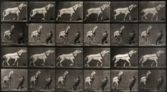 Animal Locomotion: Plate 573 (Man Pulling Horse By Reins), 1887