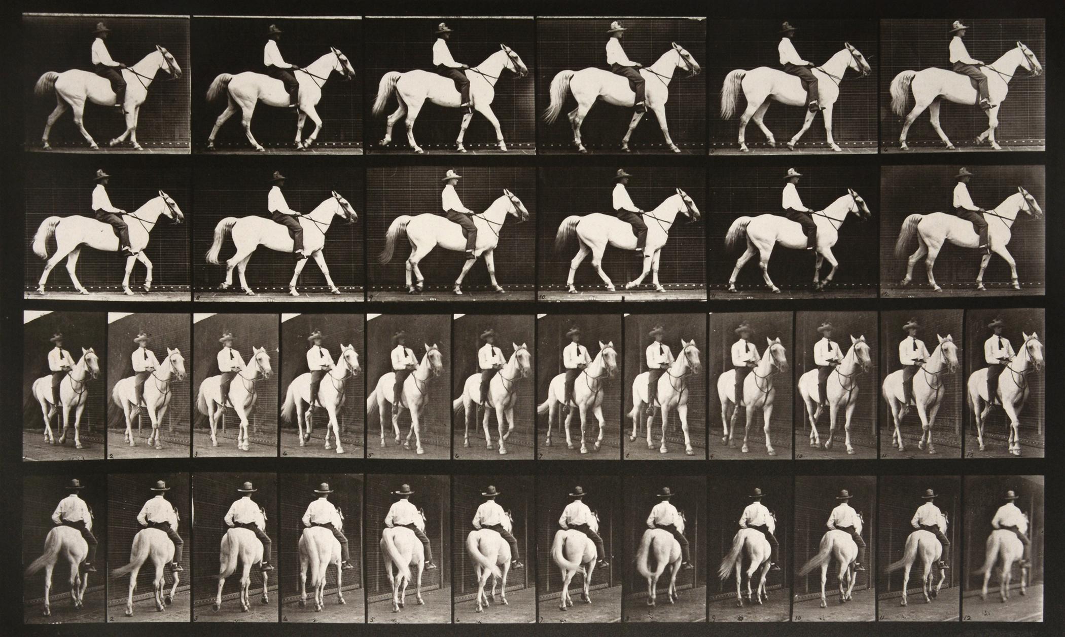 Animal Locomotion: Plate 579 (Man Riding Horse), 1887 - Eadweard Muybridge