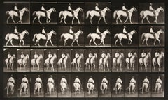 Animal Locomotion: Plate 579 (Man Riding Horse), 1887