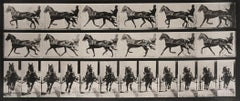 Animal Locomotion: Plate 595 (Horse Pulling Gig With Rider), 1887