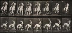 Animal Locomotion: Plate 634 (Man Riding Galloping Horse), 1887
