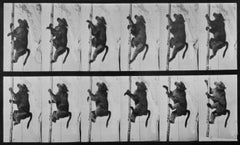 Animal Locomotion: Plate 749 (Baboon Climbing), 1887