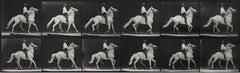 Eadweard Muybridge, Animal Locomotion (Plate 589), 1887, Collotype