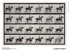Museum poster, From the series Animal Locomotion black and white vintage style