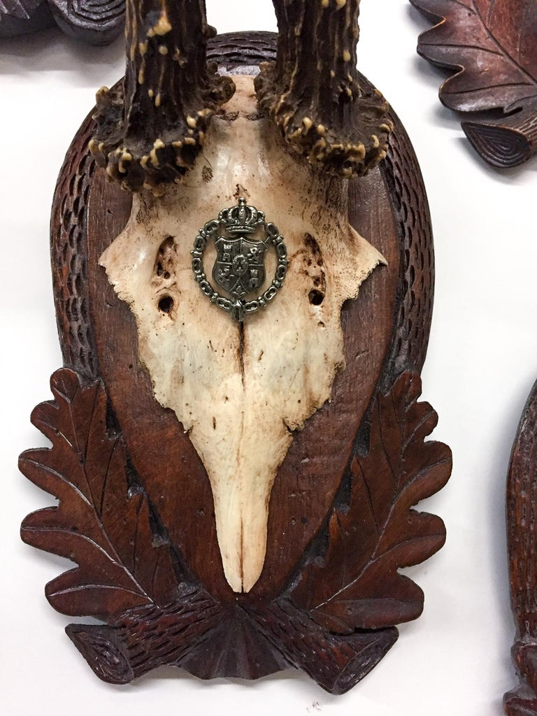 Spanish Early 19th Century Habsburg Roe Trophies on Hand Carved Black Forest Plaques For Sale
