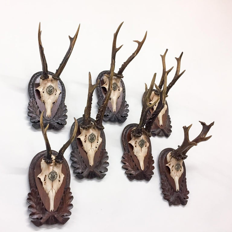 Early 19th Century Habsburg Roe Trophies on Hand Carved Black Forest Plaques In Good Condition For Sale In Houston, TX