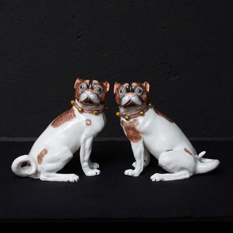 Very cute pair of matching male and female Dresden porcelain pug dog figurines made of the finest hard paste porcelain and beautifully hand painted with brown and black spots, pink collars and gold bells, early 20th century  Both have a blue