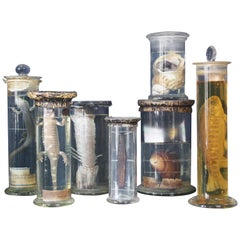 Early 20th Century Collection of Thirty Eight Zoological Taxidermy Wet Specimens