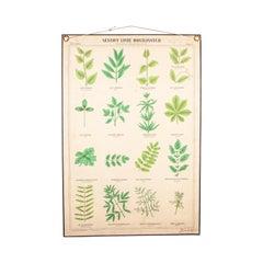 Early 20th Century Educational Chart, Rigid Chart Plants