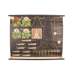 Early 20th Century Educational Chart, Seed Production