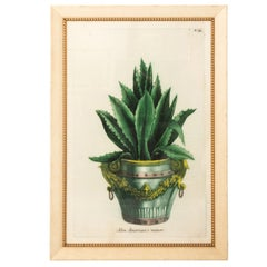 Early 20th Century Framed Print of Agave Plant
