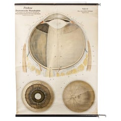 Early 20th Century German Anatomical Chart Eye and Retina
