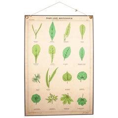 Early 20th Century Rigid Educational Botanical Chart