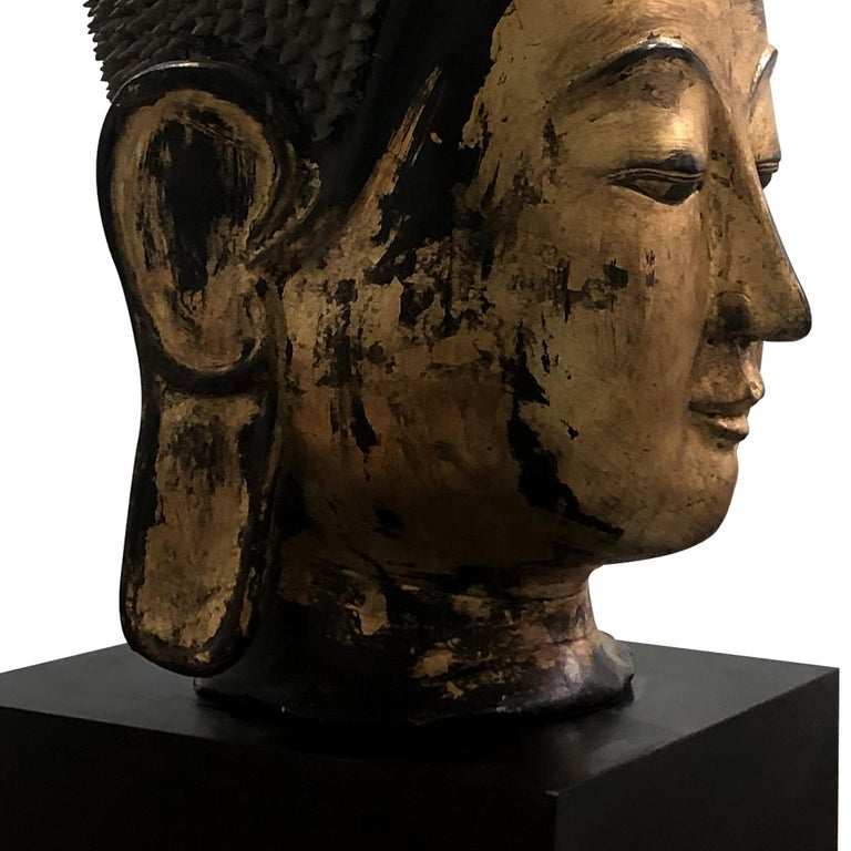 Early 20th Century Shan Burmese Large Dry Lacquer Gilt Buddha Head Sculpture For Sale 1