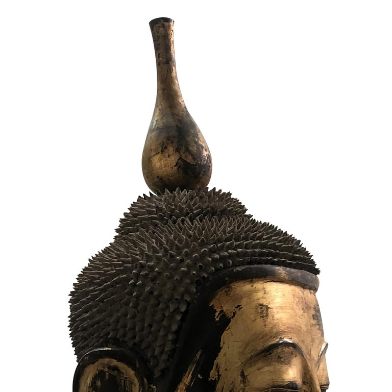 Early 20th Century Shan Burmese Large Dry Lacquer Gilt Buddha Head Sculpture For Sale 2