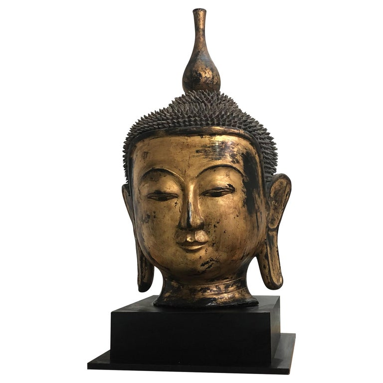 Early 20th Century Shan Burmese Large Dry Lacquer Gilt Buddha Head Sculpture For Sale