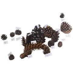 Vast Collection of Global Conifer Ferns Natural History Specimens