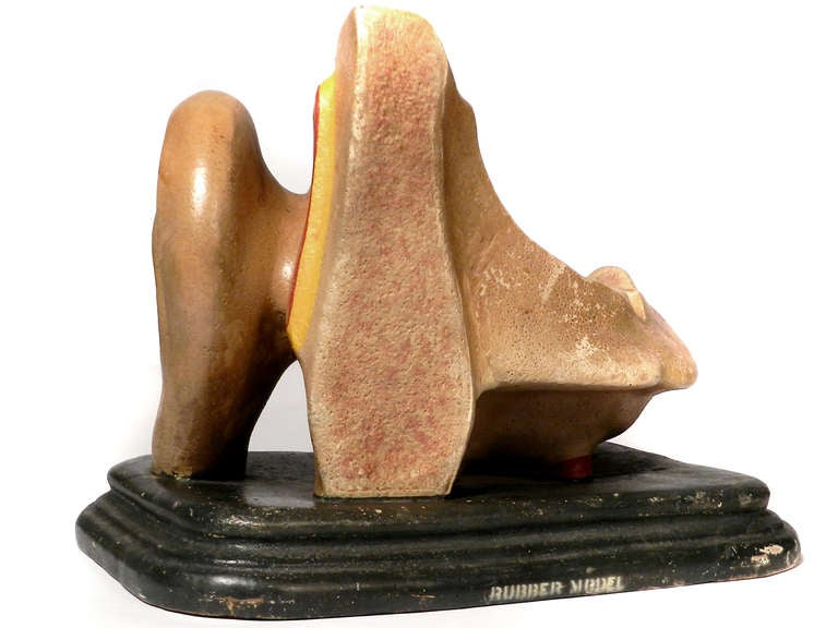 Industrial Early Anatomical Model of the Ear For Sale