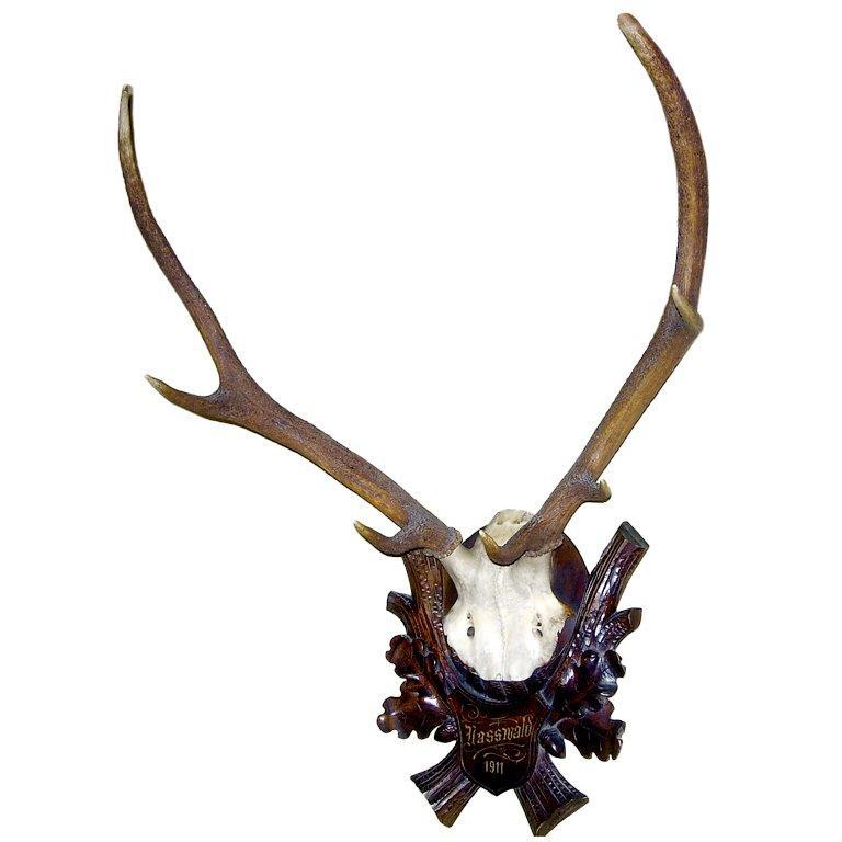 Early Deer Antler Mount on Black Forest Carved Wood Plaque