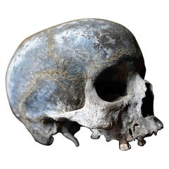Early & Well Patinated Relic Human Skull, Pre, c.1800