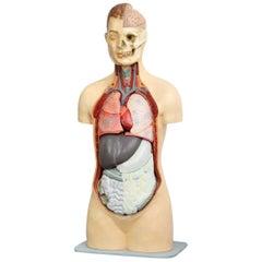 East German Anatomical Model, circa 1950s