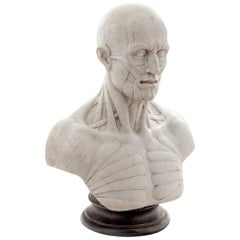 Ecorche Marble Bust of a Man
