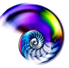 Nautilus #1 - Original Photograph by Edoardo Montaina - 2010s
