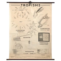 Educational Anatomical Tropisms Biology Chart by The Welch Scientific Company