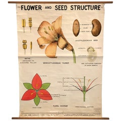 Educational Flower And Seed Botanical Chart by New York Scientific Supply Co.