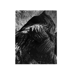 Cypress Root, Pebble Beach - 23T