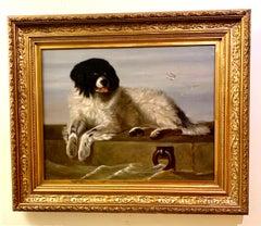 English 19th century, Portrait of a Newfoundland dog, seated
