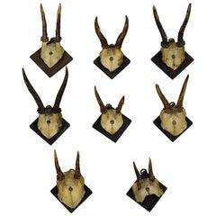 Eight Antique Black Forest Deer Trophies, circa 1900