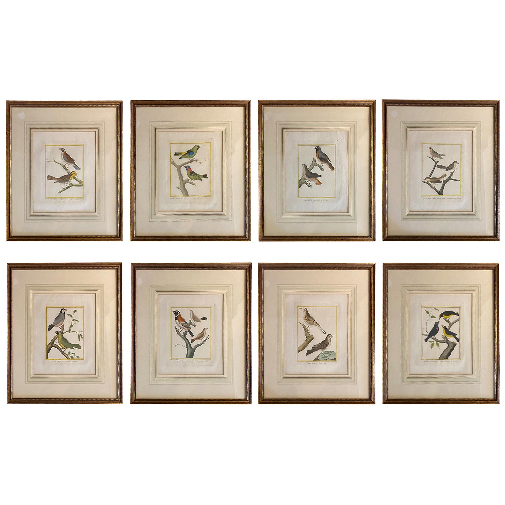 Eight Framed Hand Colored Engravings of Birds by Martinet
