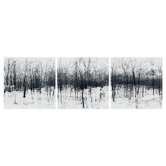 Elena Lyakir Triptych, Feels Like Home. Bridgehampton, NY Photograph, 2016