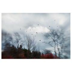 Elena Lyakir Where Swallows Hide Photograph, Aves Series, 2017