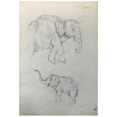 Elephant Drawing, Guido Righetti, 1919