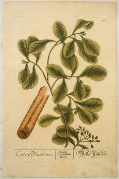 Engraving Still-life Prints