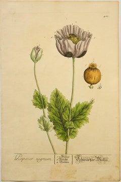 Papaver nigrum; Pl. 482
